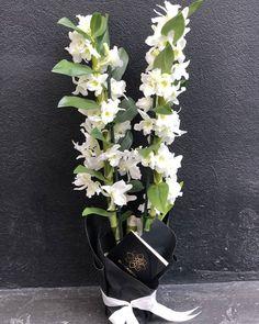 "2 aprecieri, 0 comentarii - BLOOMERIA (@bloomeria.ro) pe Instagram: ""#bloomeria #welcometotheworldofflowers #martisor #march #bucuresti #gift #flowershop #plant…"""