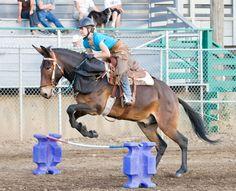 Mule Mania - Dayton, Washington