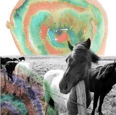 Pony Gold.