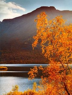 Fall in Lapland