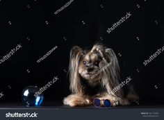 TETSUZO KIZZGAWAの写真素材、画像素材ポートフォリオ| Shutterstock Best Dogs, Lion Sculpture, Statue, Movie Posters, Image, Art, Craft Art, Film Poster, Kunst