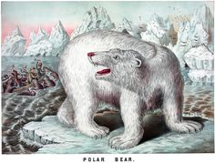 Polar Bear. #vintage #polar bear #bear #animals