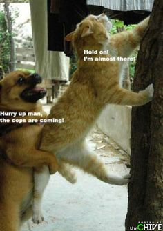 30 Funny animal captions - part 12 pics), animal memes, animal pictures with captions, funny memes, funny animals I Love Cats, Crazy Cats, Dog Love, Cute Cats, Funny Kitties, Funny Animal Pictures, Funny Animals, Cute Animals, Funny Images