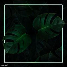 Square green neon frame on tropical leaves background vector | premium image by rawpixel.com Leaf Background, Paper Background, Background Patterns, Background Images, Framed Wallpaper, Neon Wallpaper, Neon Design, Image Fun, Tropical Leaves