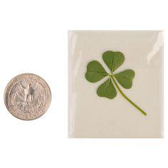 Natural Genuine Real 4 Four-Leaf Clover Green Irish by ILoveKewpie