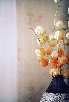 vase | Flickr - Photo Sharing!