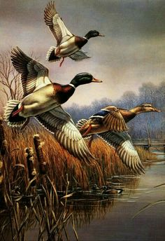 Realistic Oil Painting Of Birds Wildlife Paintings, Wildlife Art, Paintings Of Birds, Art Canard, Graffiti Kunst, Realistic Oil Painting, Duck Art, Hunting Art, Bird Art