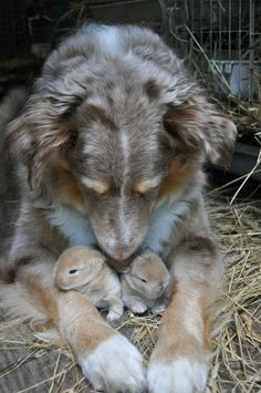 A dog with two little cute rabbits
