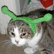 ways to torture your cat with clothes