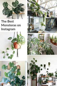 6258 best plant inspiration images in 2019 indoor gardening rh pinterest com