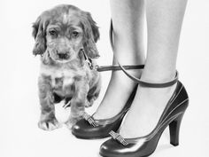 Dog Training - Now that's a CUTE picture!!!