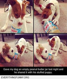 funny dog picture adorable dog tries to give his stuffed friend peanut butter share with his toy