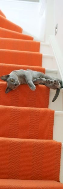 orange is a bold choice as a stair runner, but I really like the look of this staircase. No grey cats in my house.but the grey is beautiful. Orange Is The New Black, Chat Bizarre, Photo Chat, Pass Photo, Orange Aesthetic, Cat Aesthetic, Carpet Stairs, Wall Carpet, Orange Crush