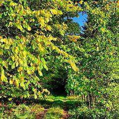 A Splendid Autumn Day