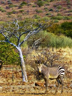 #Palmwag #Namibia a #Wildlife Paradise in #Africa