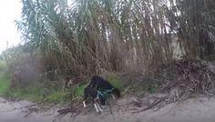 """""""O Grito do Bicho"""": Dois cães abandonados e amarrados pelo pescoço um ..."""