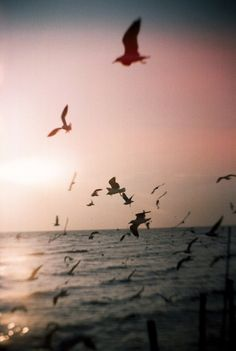 birds and a beach at sunset
