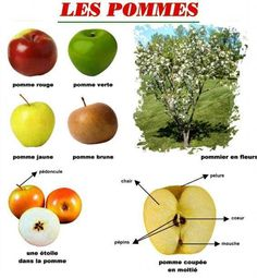 les pommes                                                       … Kindergarten Language Arts, Kindergarten Crafts, Edm, French Teaching Resources, Apple Activities, Apple Theme, Apple Seeds, French Food, Autumn Theme