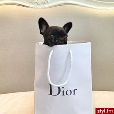 Love Frenchies, Love Dior!