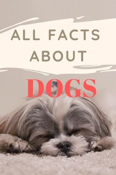 LIST Of Dog facts you may not know : Dogs are mentioned 14 times in the Bible. City dogs live 3 years longer than a country dog, on average. Chihuahua Breeds, Chihuahua Puppies, Dog Breeds, Dogs And Puppies, Funny Dog Memes, Funny Dogs, Irish Wolfhound Dogs, Dog Pee, Dog List