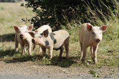 ¿Qué es una granja sustentable?