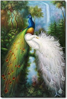 Peacock Art...By Artist Unknown...