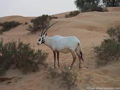 Excursion dans le désert de Dubaï - Carnet d'escapades