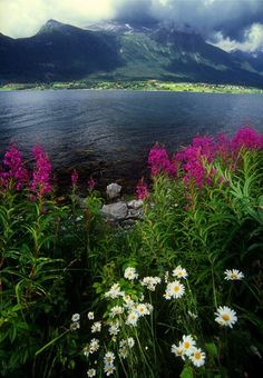 Flowers and Romsdal Fjord, Norway ~ Photo by Bruce Muirhead