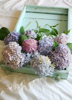 Sweet, charmingly vintage feeling hydrangeas. #flowers #arranged #spring #purple #pink #wedding #shabby_chic #vintage_chic #hydrangeas