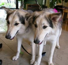 Cancel Cruel Dog Cloning Show - ForceChange