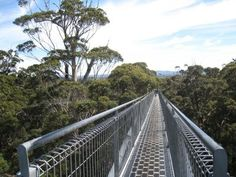 Tree Top Walk, Tingle Forest