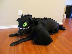Dog Halloween Costume: Toothless - Yes!