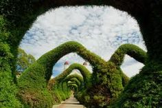 Sarchi Costa Rica where Edward scissor hands must have lived?? there are lots and lots of Topiaries