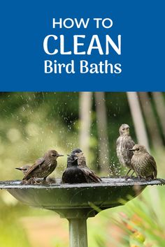 Bird baths, if not maintained properly, can become very disgusting. Here we discuss the proper way to maintaining and clean a bird bath.   #Birds #BirdWatching #BirdFeeding #Birding Bath Cleaners, Bird Baths, Natural Cleaners, Birdwatching, Wild Birds, Problem Solving, Bird Feeders, Good To Know, Backyard