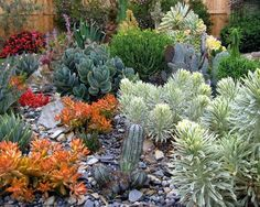 A succulent collection in south San Luis Obispo County.