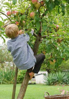 climbing trees....