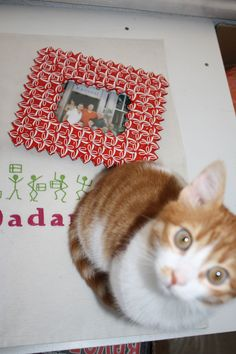 made from labels for pet bottles (cat not included) - 45 TL, 15 euro Pet Bottle, Euro, First Love, Bottles, Frames, Cats, Animals, Gatos, Animales