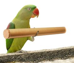Fill cardboard tube with foraging items and food. Block access with bird-safe corks. Foot toy for larger parrots, but can also be hung by birdy skewer or string. To make it easier, make holes to tube to get bird started.