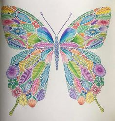 Butterfly  #milliemarotta #tropicalwonderland