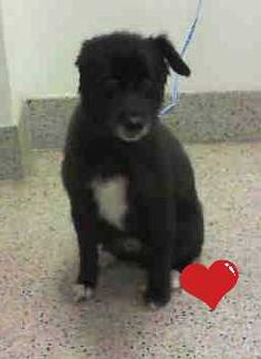 8/13/16 *URGENT* SENIOR-- NO INTREST!!!--NEEDS HELP!*** CALEB (A1197893) I am a neutered male black and white Terrier mix. The shelter staff think I am about 9 years old and I weigh 15 pounds. I was found as a stray and I may be available for adoption on 08/12/2016. — at Miami Dade County Animal Services. https://www.facebook.com/urgentdogsofmiami/photos/a.474760019225073.115405.191859757515102/1257158320985235/?type=3&theater