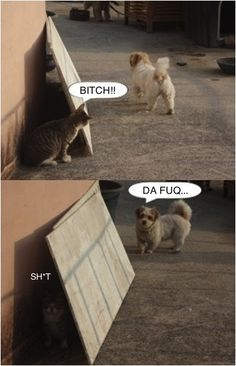 this is literally what shorty does all the time..he is the cat :(