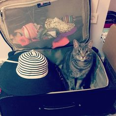 Packing friends! 22