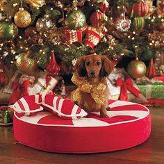 Peppermint Swirl Pet Bed for the dog. (I can't imagine putting our wild man under our tree to hang out, but if he was tired enough it would be cute!)