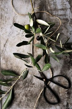 Olive branches make me think of pressing olive oil at my friend Kirsten's house!