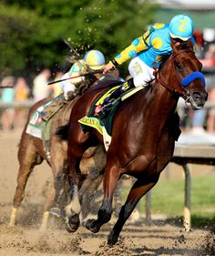 All eyes will be on American Pharoah at the Belmont Stakes, June 6, to see if he can make history by winning racing's Triple Crown: Kentucky Derby, Preakness and Belmont. Description from usatoday.com. I searched for this on bing.com/images