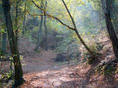 Montevecchia (Lecco, Italy) - Autumn lights in the woods