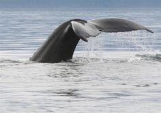 Juneau Alaska Whale Watching Tour