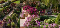 A Rosarian's Dream Garden Shadow Hills by Grace Design Associates_3