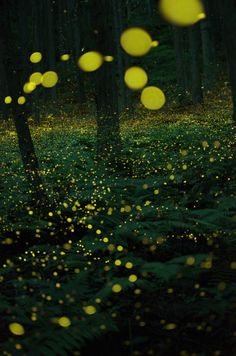 lifeisverybeautiful: Firefly, Japan - landscapes & nature