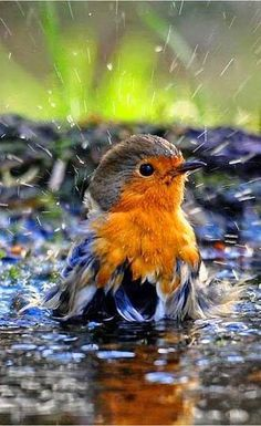 A pretty colored bird enjoying the rain.